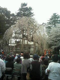 桜とインド舞踊