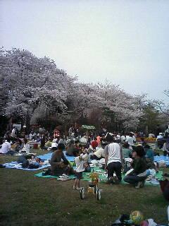 桜と人人人